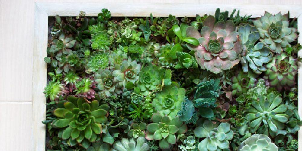 Comment entretenir un cadre végétal ?