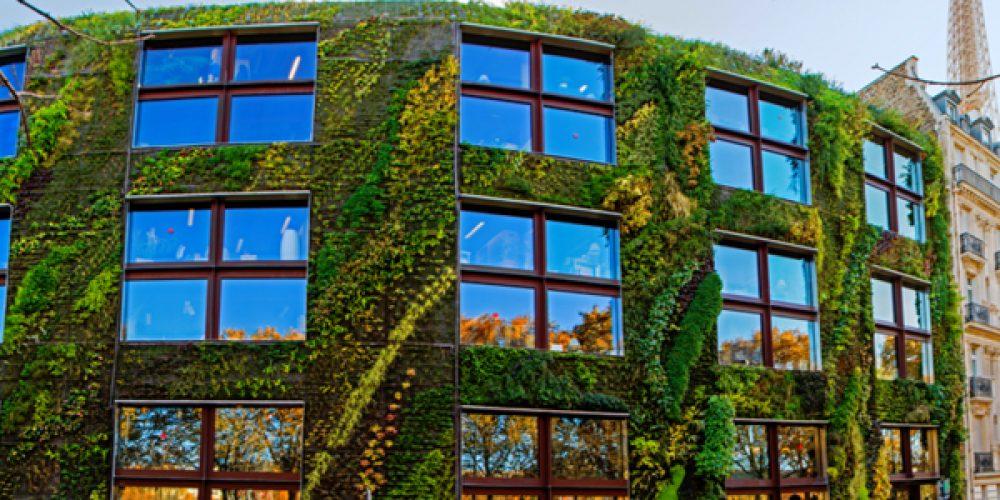 Conseil pour choisir son type de mur végétal