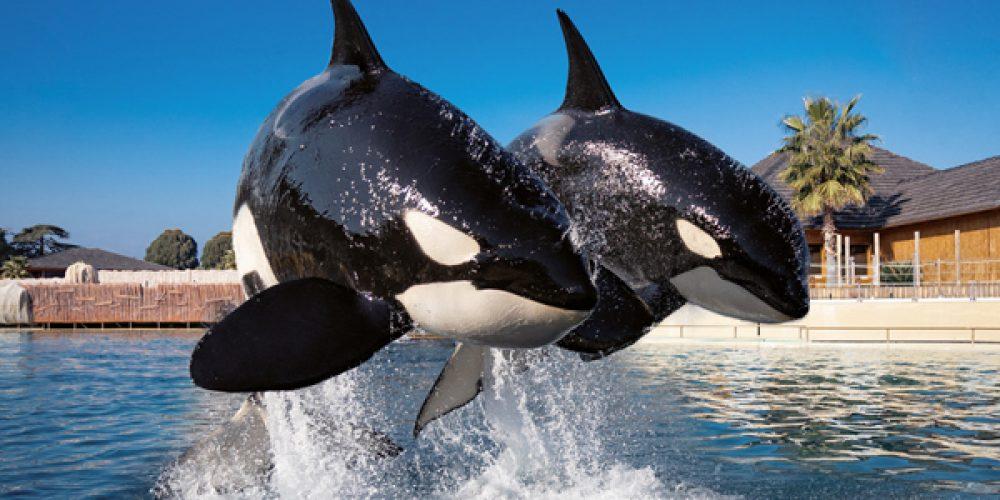 Loisirs en famille à Nice : visitez le parc aquatique Marineland